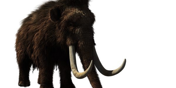 USA and Korea in race to clone woolly mammoth