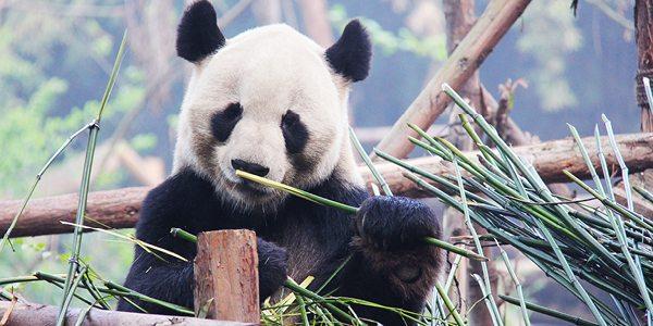 DNA test helps confront illegal wildlife trade