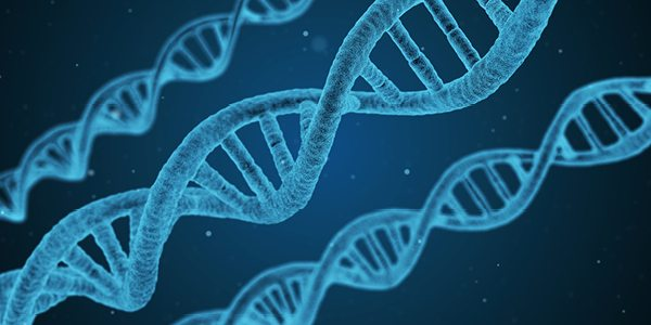 How much DNA do we share?