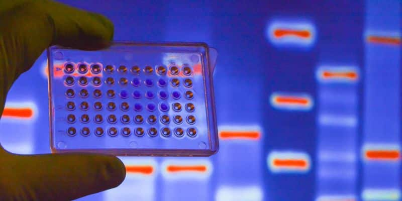 Foreign aid workers tracked down using DNA technology